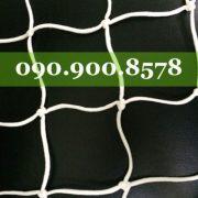 IMG_1045-500x500
