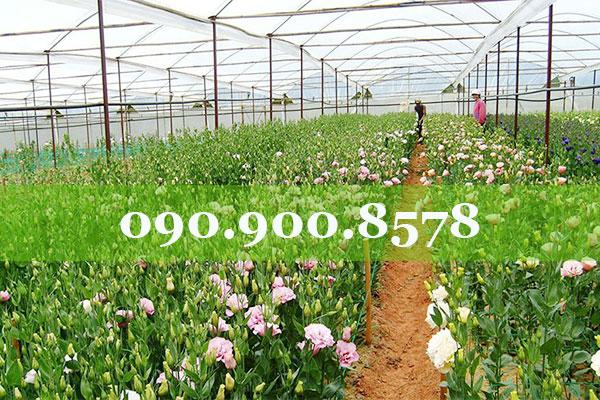 Lưới che nắng cho vườn hoa