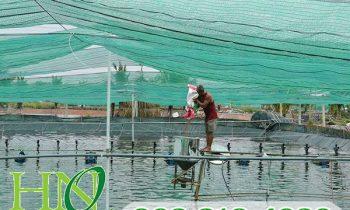 Hai loại lưới che nắng được ưa chuộng trên thị trường