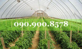 Nhà lưới trồng rau hai mái dốc