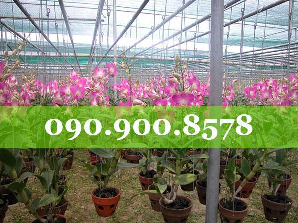 Lưới che nắng vườn hoa lan