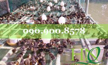 Tại sao nên sử dụng LƯỚI NHỰA CỨNG trong chăn nuôi gà vịt???