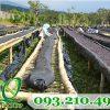 Lưới phơi nông sản sợi cước đan xéo