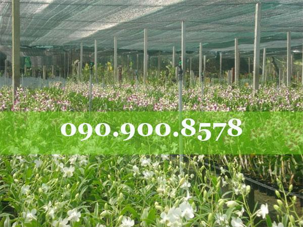 Lưới che nắng cho vườn hoa kiểng