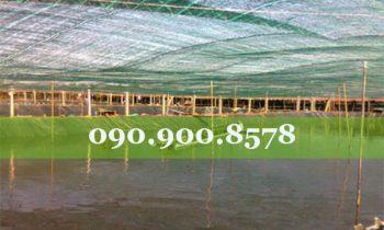 Mô hình nuôi tôm công nghệ cao phát triển mạnh ở Đồng Nai