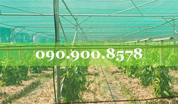 Nhà lưới cho cây nông nghiệp