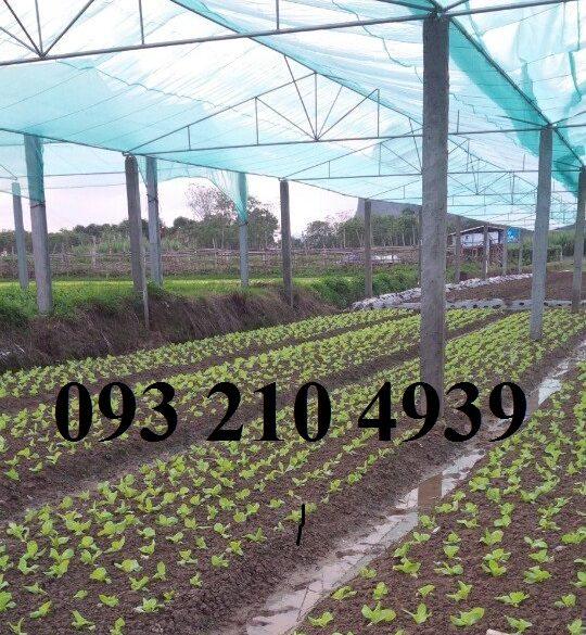 Lưới che nhà lưới trồng rau