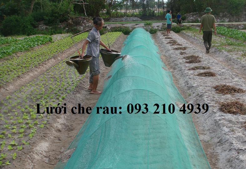 Lưới mùng phủ luống rau