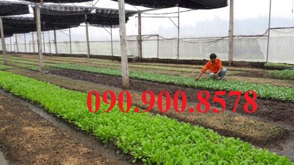 Mô hình nhà lưới trồng rau