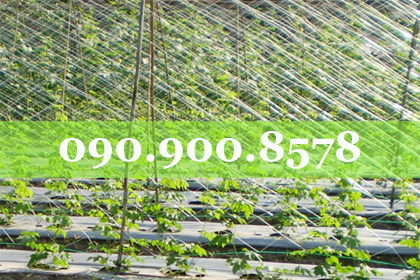 Lưới làm giàn cây đậu