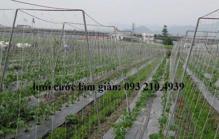 Lưới làm giàn leo rau