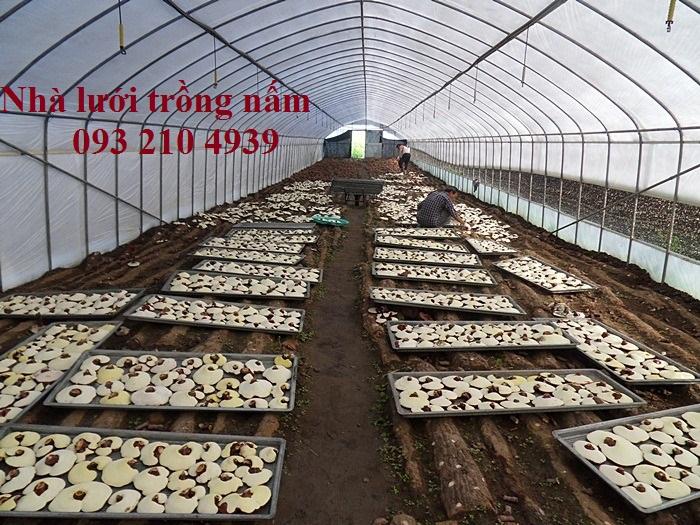 Nhà màng trồng nấm