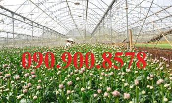 Nhà lưới trồng hoa kiểng