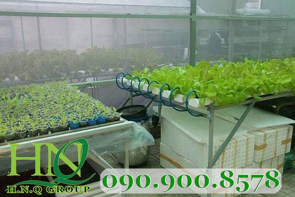 Gía thể trồng rau thủy canh