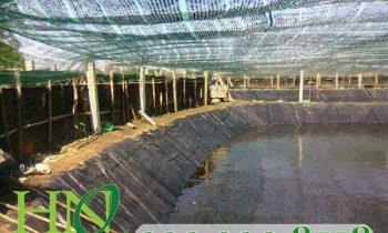 Các loại lưới nông nghiệp cần trang bị cho ao nuôi tôm
