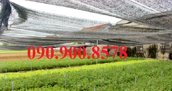 Lưới che nắng cho cây cần khô