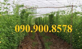 Phân loại lưới làm giàn leo cho rau và cây trồng