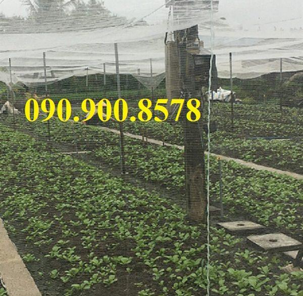 Lưới chắn côn trùng làm nhà lưới trồng rau