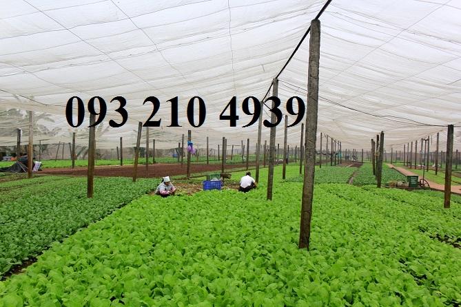 Nông trại trồng rau sạch Hoài Đức