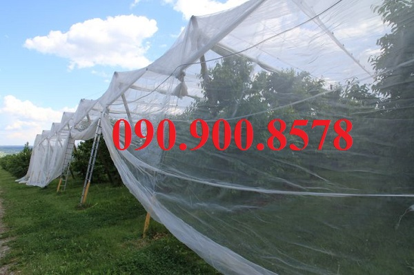 Nhà lưới bảo vệ cây ăn trái