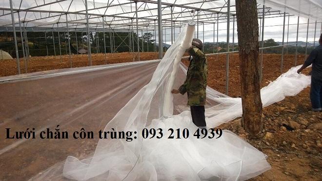 Nhà lưới trắng trồng rau ở Đà lạt