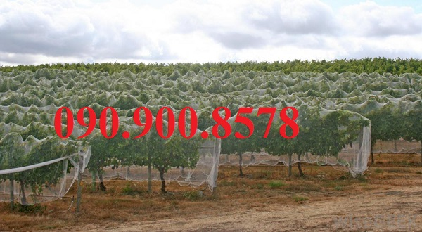 Lưới trùm cây ăn trái