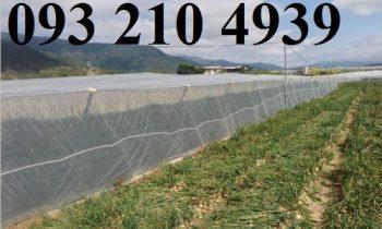 Lưới mùng che công trùng cho rau