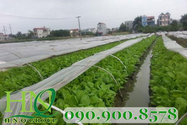 Các loại lưới mùng dùng cho nông ngư nghiệp