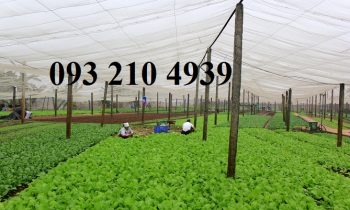 Nhà lưới trồng rau an toàn