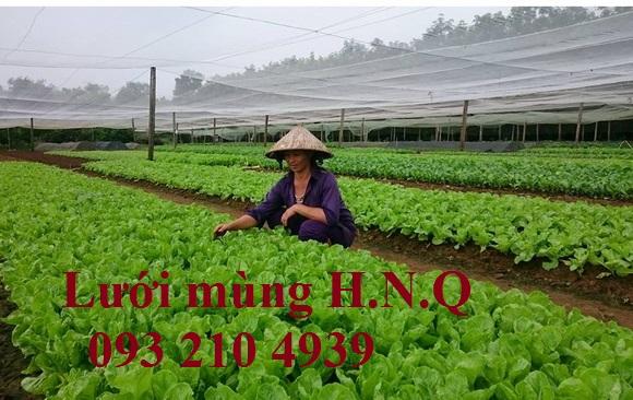 Lưới mùng trồng rau