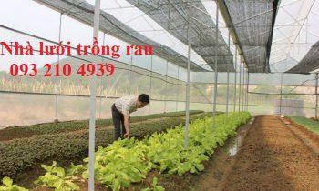 Anh Bùi Quang Đức với mô hình trồng rau sạch trong nhà lưới