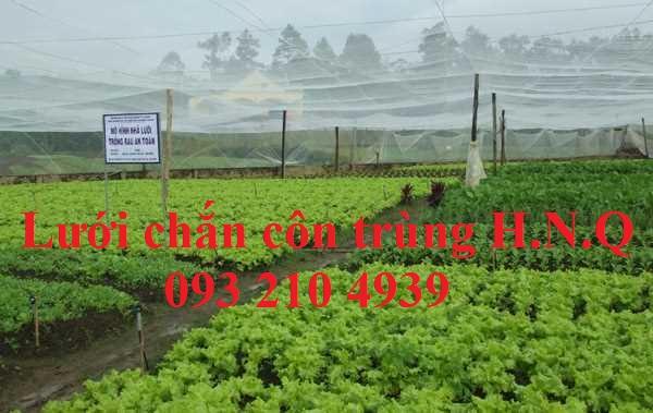 Lưới mùng căng nhà trồng rau