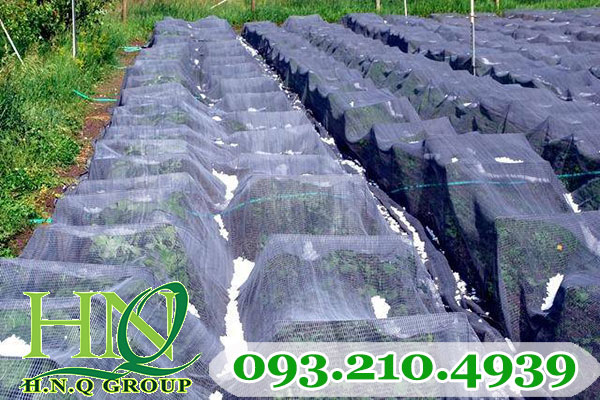 Lưới che nông nghiệp