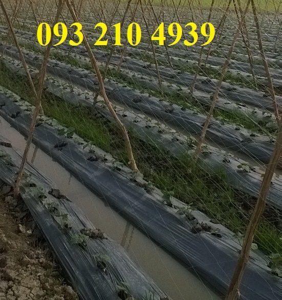 Lưới làm giàn đậu cove