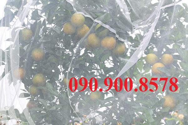 Trùm lưới mùng cho cam