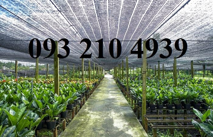 Nhà lưới trồng hoa cảnh