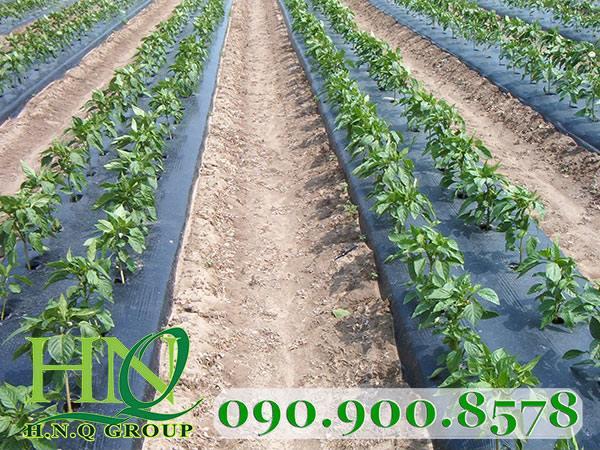 Màng phủ cây mầm nông nghiệp