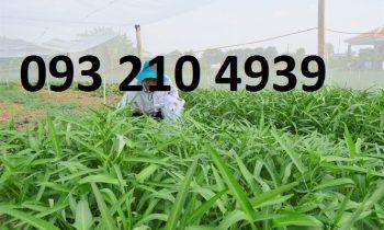 Sản xuất rau an toàn trong nhà lưới ở Nam Định