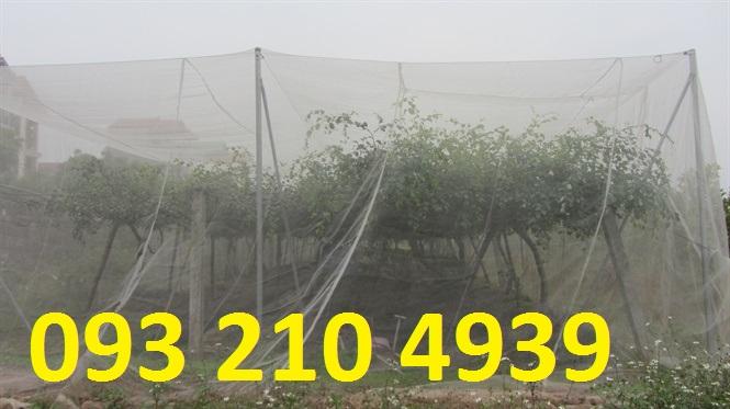 Lưới chống ruồi vàng cho vườn táo ở Ninh Thuận