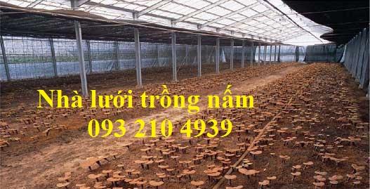Nhà trồng nấm linh chi