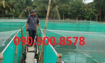 Lưới nhựa làm vèo nuôi cá lóc ở Vĩnh Long