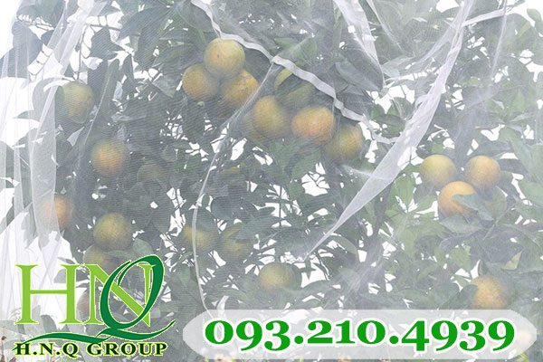 Lưới trùm cây ăn trái chất lượng