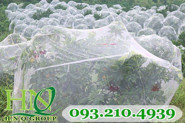 Lưới mùng chống côn trùng