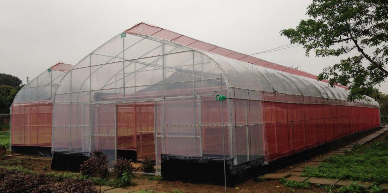 Cách tùy chọn màng nhà kính hcm phù hợp cho nông nghiệp