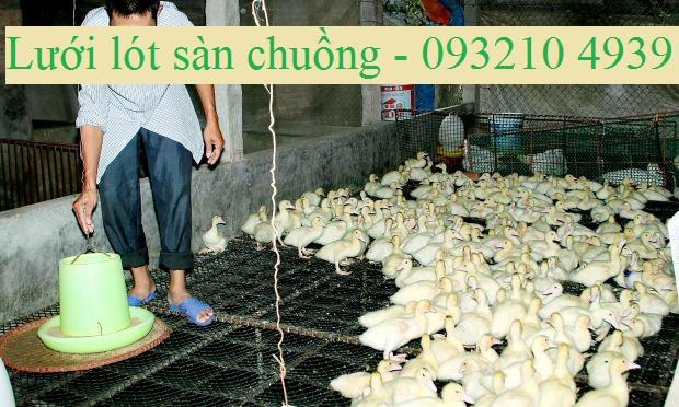 luoi-lot-san-chuong-nuoi