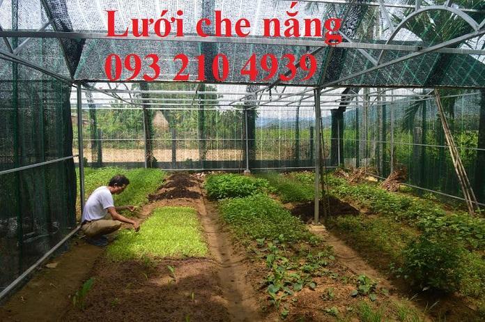 Thi công ngay nhà lưới HCM – trồng nông nghiệp tiên tiến