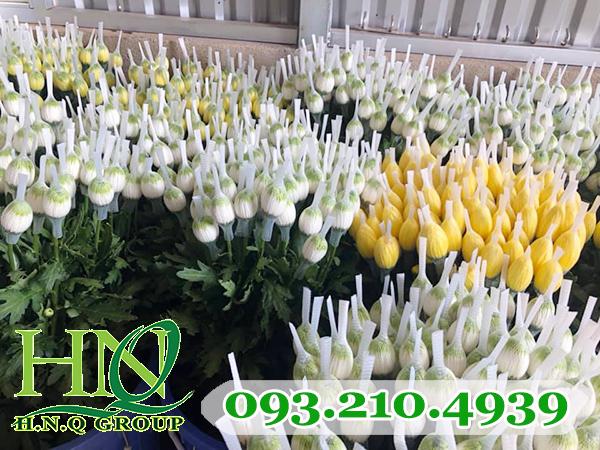 Lưới bao hoa bảo vệ nụ, giúp hoa tươi lâu hơn trong quá trình vận chuyển