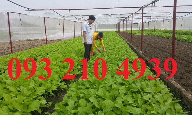 Nhà lưới trồng rau mái bằng